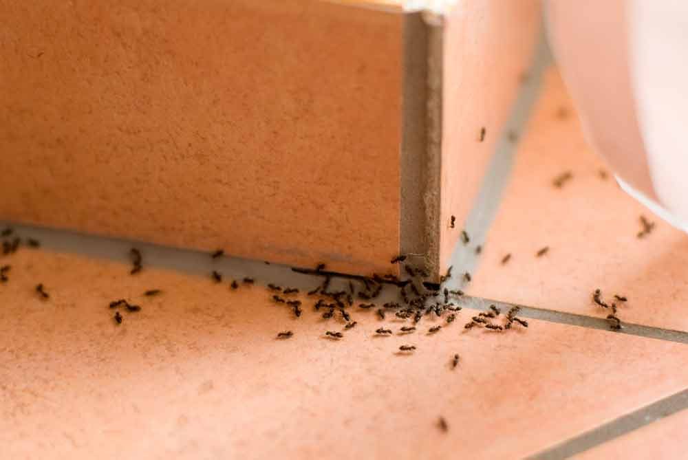 ant control richardson texas