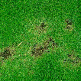lawn disease control richardson texas