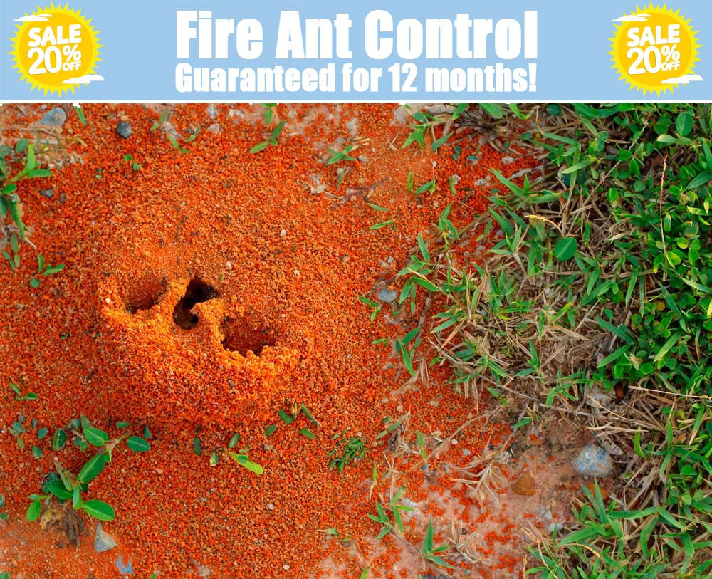 fire ant control dallas texas