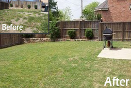 drought tolerant lawn dallas tx