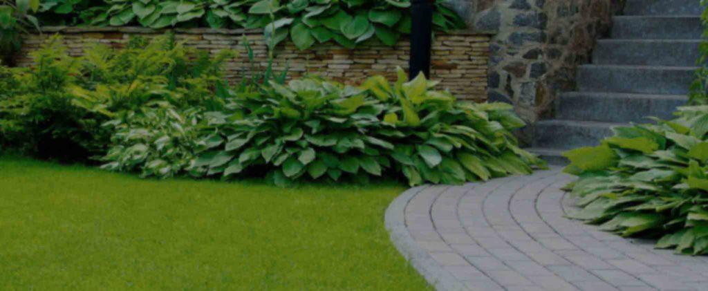 Appropriate Lawn Fertilization