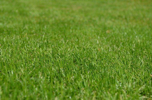 Lawn Disease Control to Quickly Spruce up a Shabby Lawn
