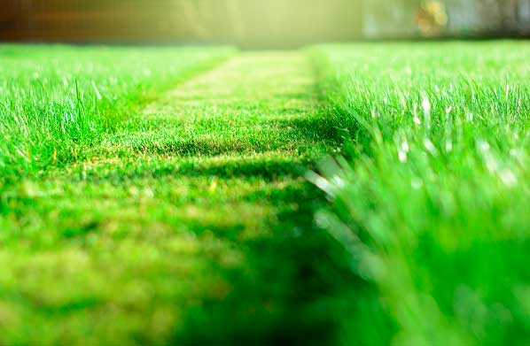 Garland Lawn Control: How to Keep Your Lawn Under Control and In Great Shape