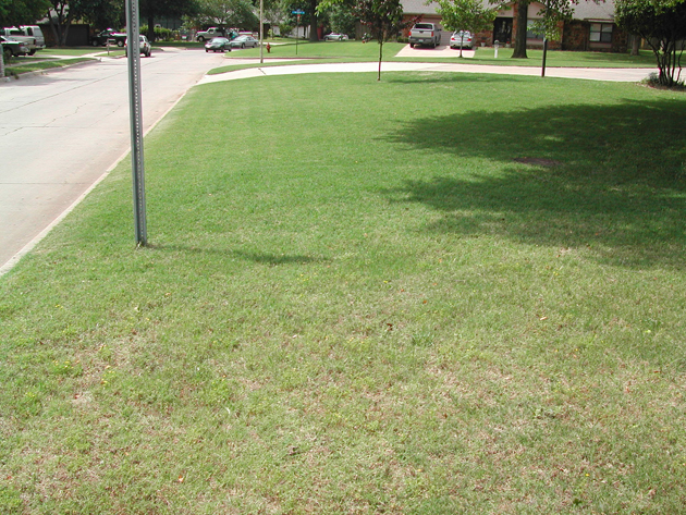 Liquid Aeration is the Best Solution for Compacted Lawns