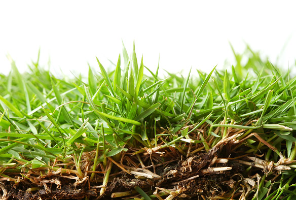 Zoysia Lawn Care: How to Keep Your Zoysia Grass Healthy, Green, and Patch Free
