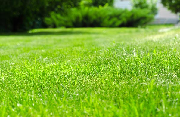 Liquid Aeration Technology: Abracadabra Your Lawn with SoilTech!