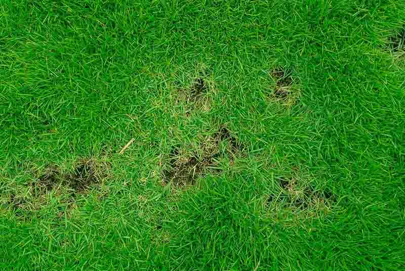 How To Prevent Lawn Disease