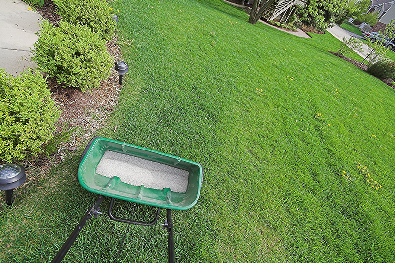 How Often Do You Need to Fertilize Your Lawn?