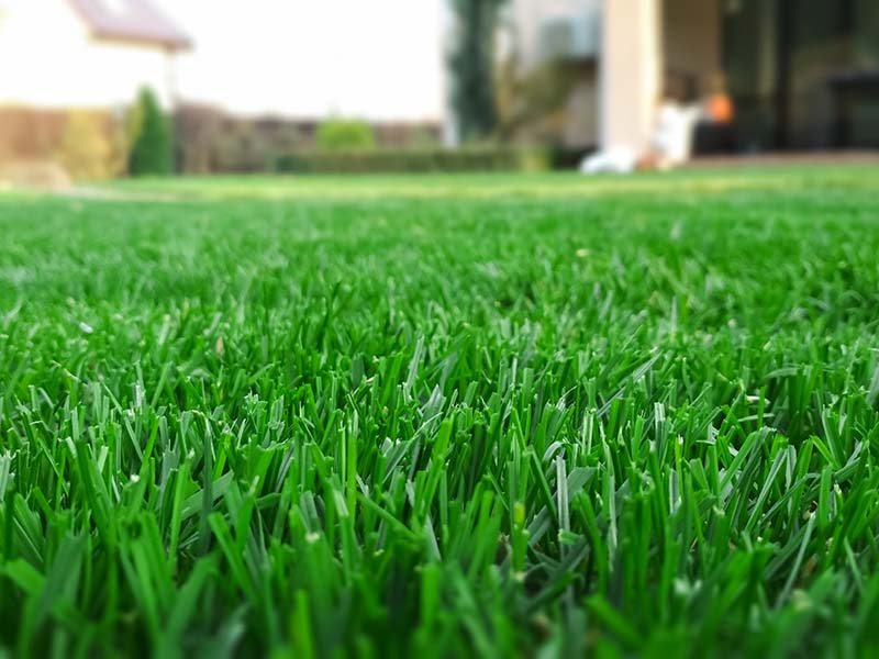 Why Pre-Emergent is Just One Step of Removing Dallis Grass