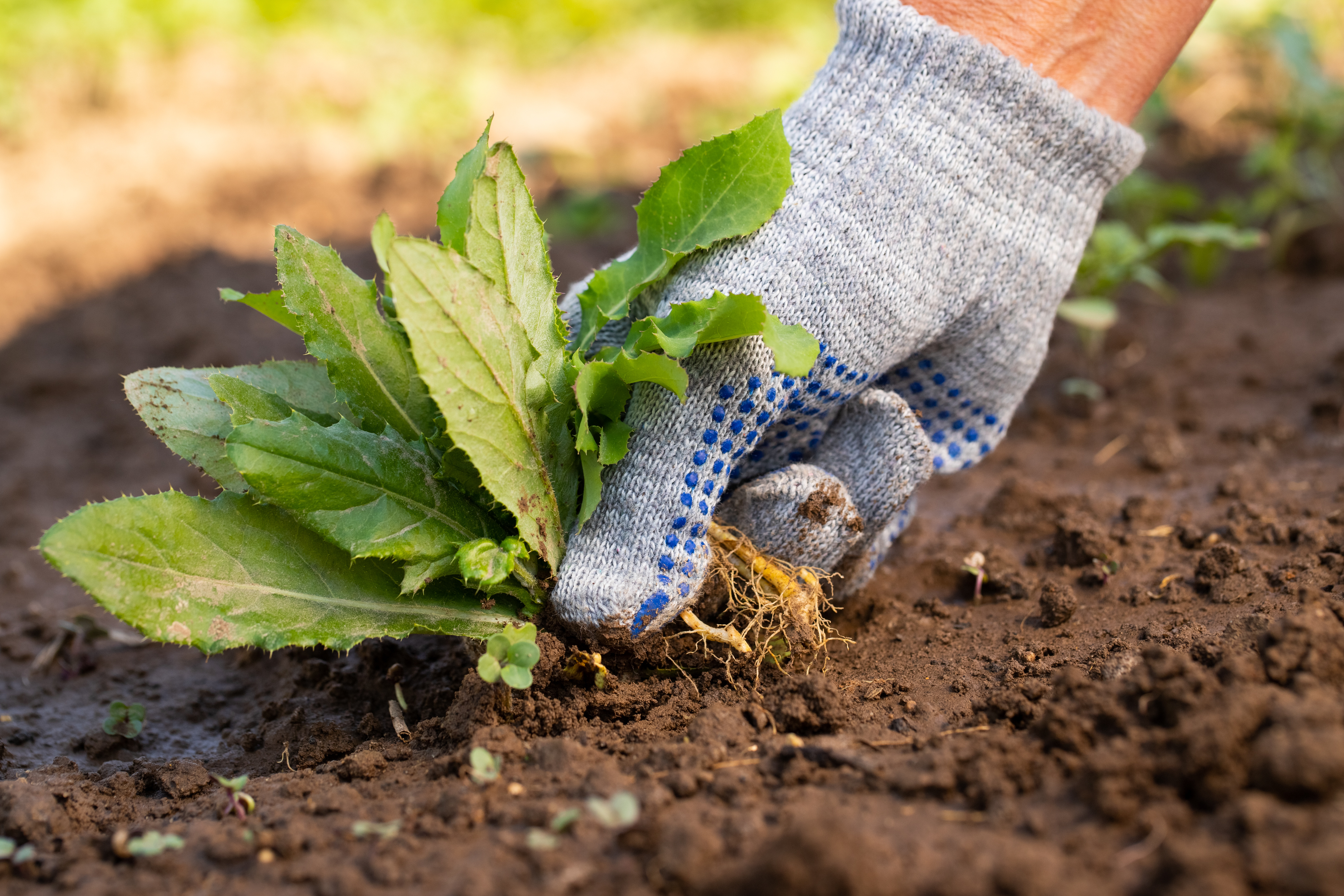 Six Tips To Prevent Weeds From Growing On Your Lawn