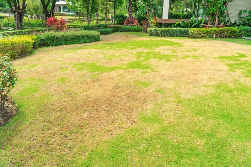 Drought Damage or Chinch Bugs? This Easy Test will Help you Know